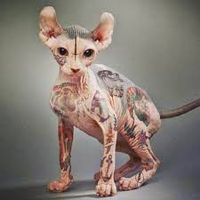 tatoo cat