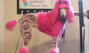 tattoo poodle